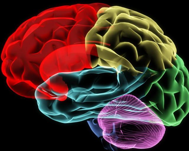 human-brain-zones-colorful-graphic